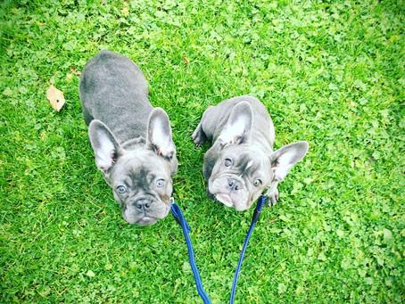 Bleu and Bella