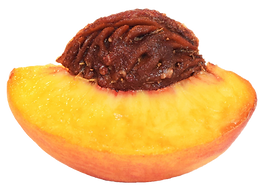 logo-site_transparent_peachh.png