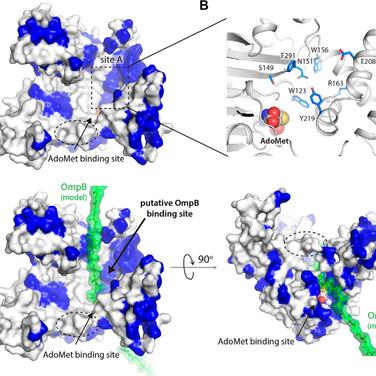 PKMT1 ligand model