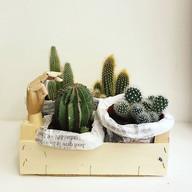 Začaly mě bavit kaktusy. A je z toho zahrádka v bedýnce od mandarinek..😉.jpg