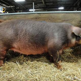 Pennsylvania State Farm Show