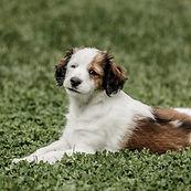 Hunde, Hundeshooting, Hundefotografie