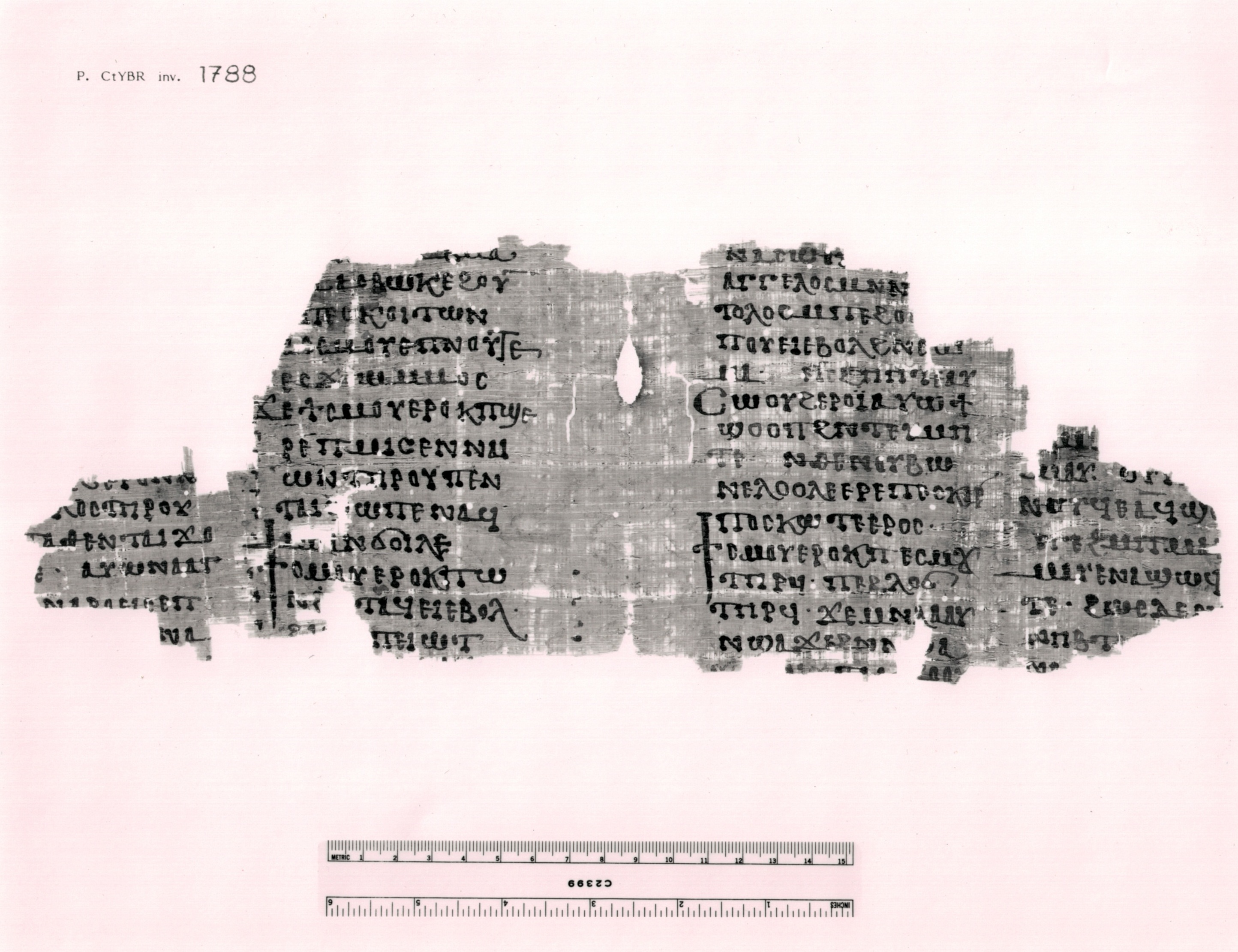 3. P.CtYBR inv. 1788.jpeg