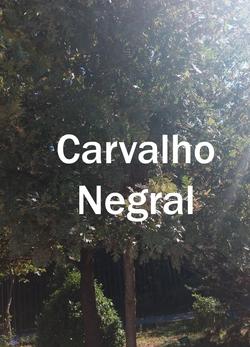 carvalho negral2.jpg
