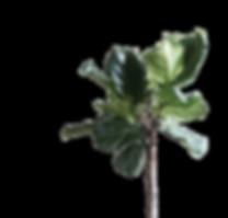 Blume Homepage.png