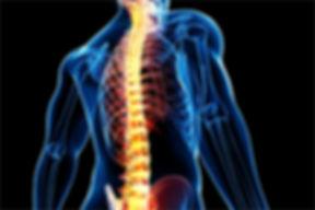 spine-anatomy.jpg