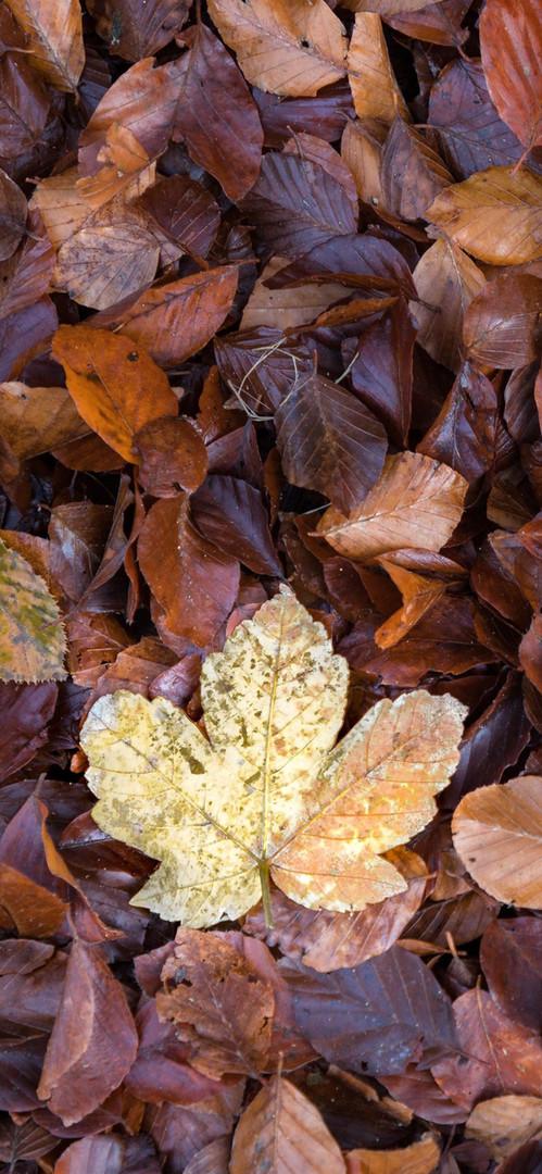 Foglia d'autunno.jpg