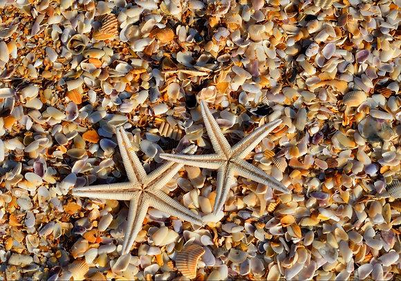 Conchas y estrellas de mar