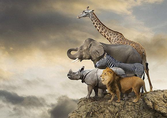 Animales al borde del abismo