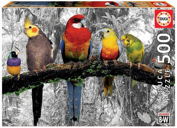 Pájaros en la jungla