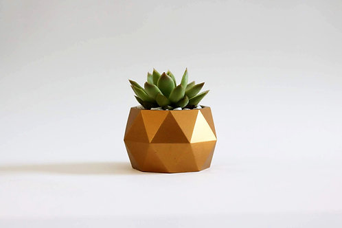 Mind the Minimal : Sphere Concrete Planter with Succulent