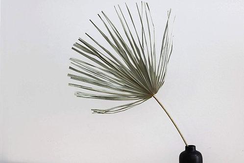 Mini Palm