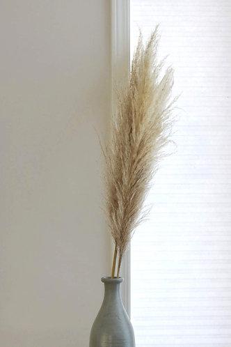 Pampas Grass - Single Stem