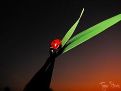 LadyBug-TP-1.jpg