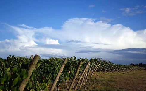 Wine Farm_edited_edited.jpg
