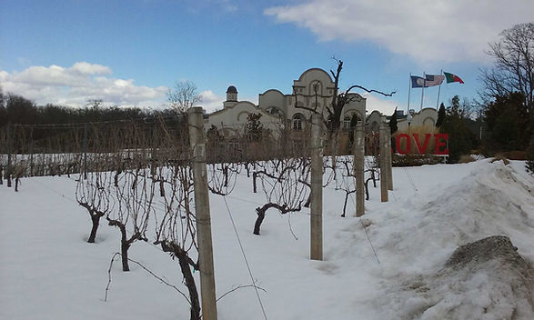 Vinyard-Snow-2.jpg