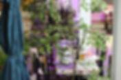 patio5 vip vip.jpg