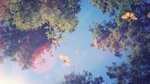 Monarch Butterflies, Mothers, Sunlight, and Cornea