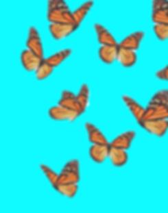 Beautiful%25252520butterfly%25252520flyi