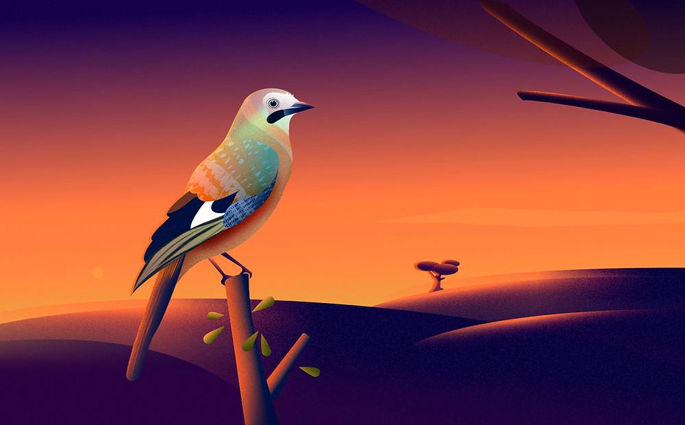 Jay bird vector illustration in Affinity Designer