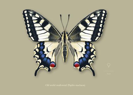 Scientific illustration for LIC (UA, Portugal)