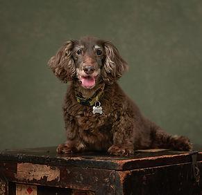 peteroharaphotography-pet-portraits-palm