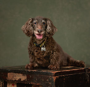 peteroharaphotography-pet-portraits-palm