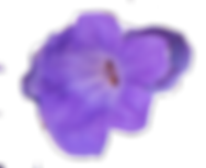 lavender single flower.png