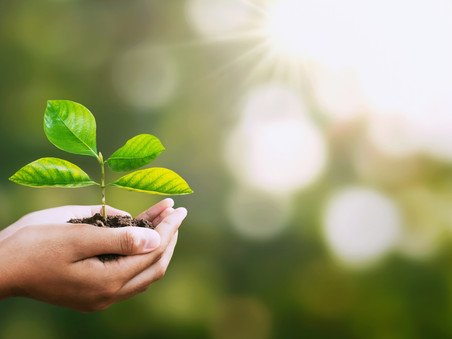 Green Office Environment Tips for Busy Companies