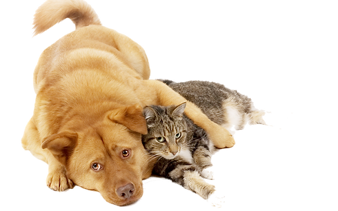 Animals_Various_together_Dog_and_cat_red