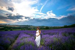 Lavender Fields, Kent UK