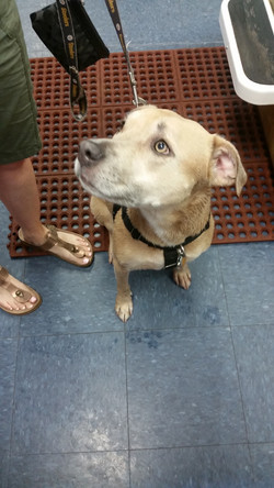 Biggies Bullies Charity Dog Wash 201
