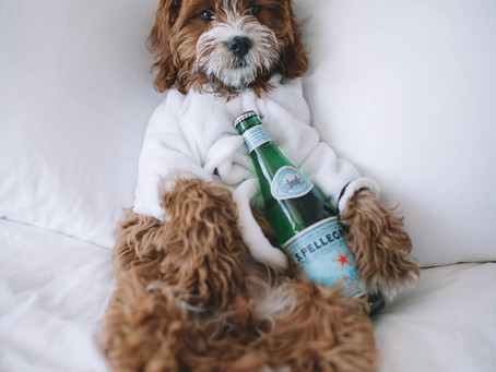 Tips For Hotel Vacationing With Your Dog