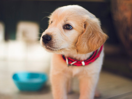 Keeping Man's Best Friend Safe At Home