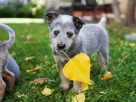 Yard Safety Tips For Your Four-Legged Friend