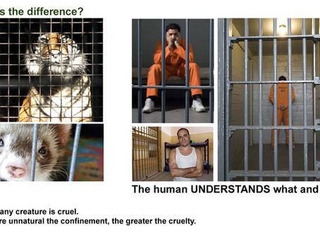 Cage Or Prison?