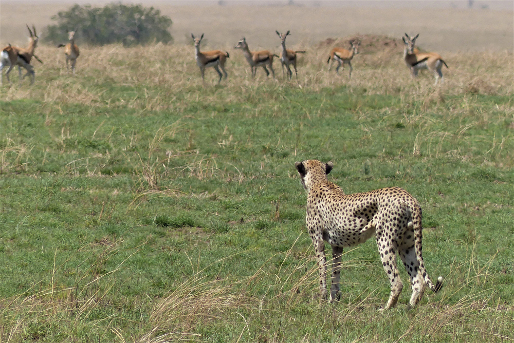Serengeti buffet
