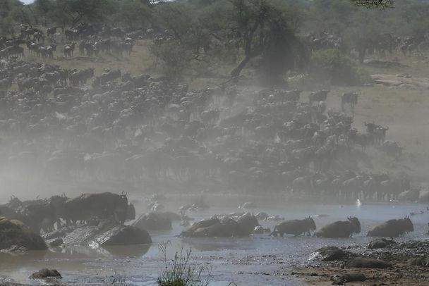 Perilous River Crossing