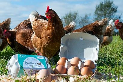 butlers-organic-eggs-promo-1.jpg.webp