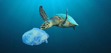 Plastic%20Polluted%20Ocean_edited.jpg