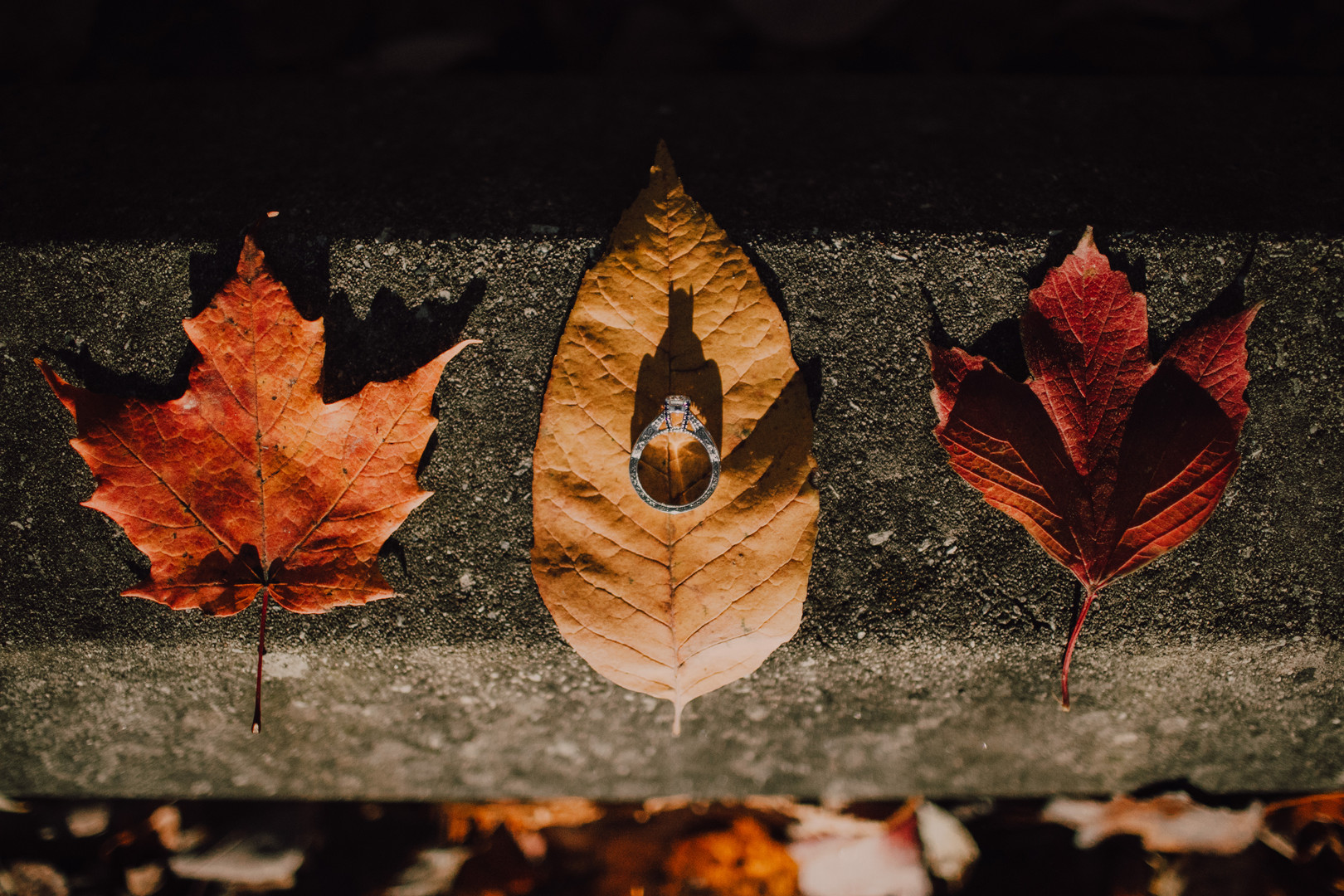 A silver engagement ring sits on a yellow leaf at a Door County engagement session
