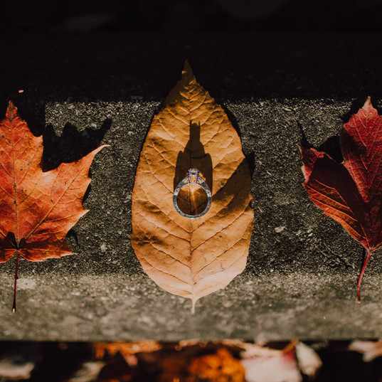 An engagement ring nests on top of fall leaves at a Peninsula State Park engagement session