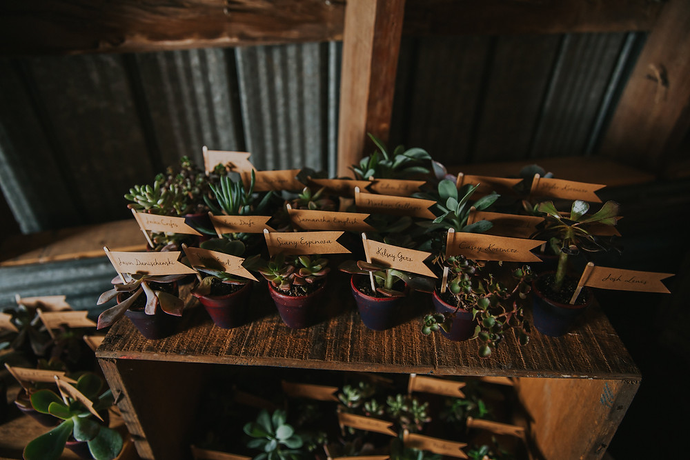 Small, individually potted succulent plants sit on a wooden crate for guest favors at a Madison Wisconsin Wedding