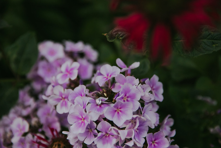 A diamond engagement ring sits on hydrangea flowers