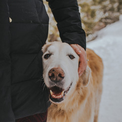 A close up of a dog during a snowy winter engagement session at Sapphire Point