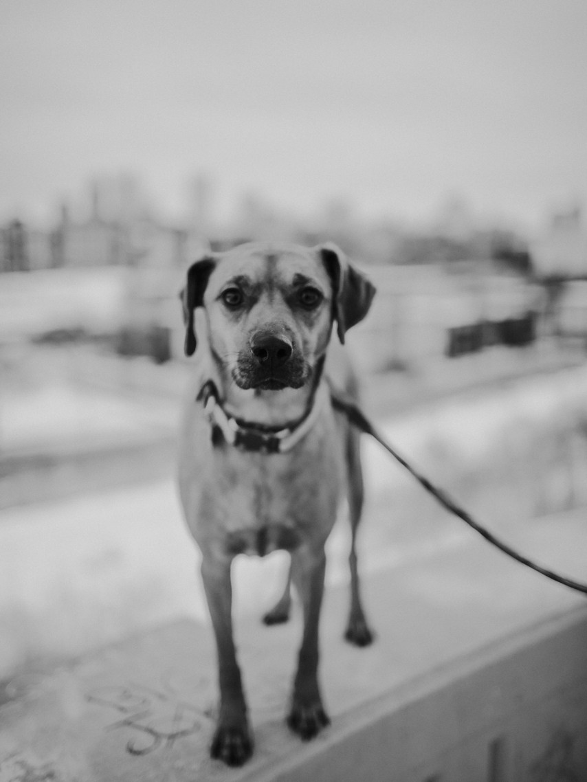 A dog looks at the camera during a downtown Milwaukee engagement