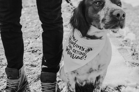 A dog sits next to his master's feet during Stevens Point engagement photos
