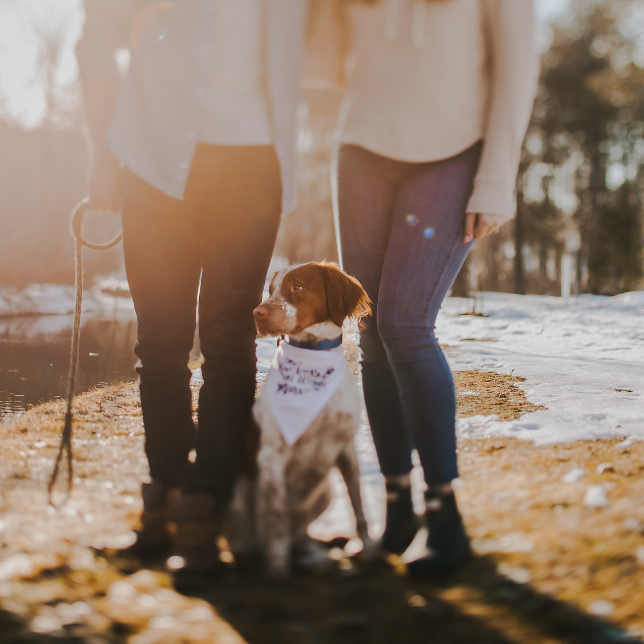 A close up of a dog sitting between a man and a woman in unique Wisconsin engagement photos