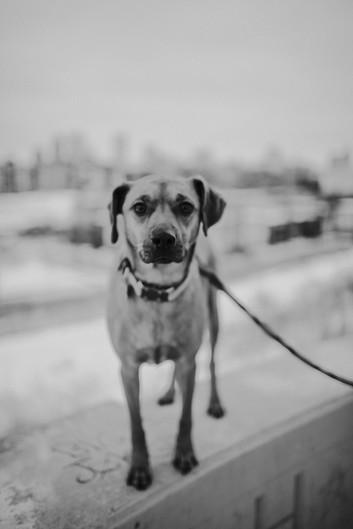 A dog looks at the camera in Kadish Park