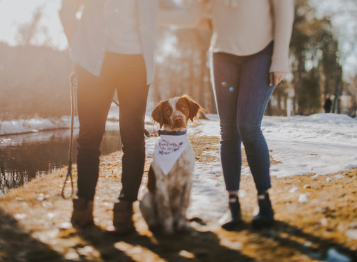 How to Include Your Dog In Your Engagement Photos  | Wisconsin Wedding Photographer